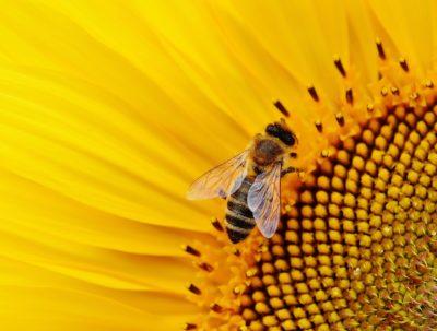 Volksbegehren Artenvielfalt - Rettet die Bienen!