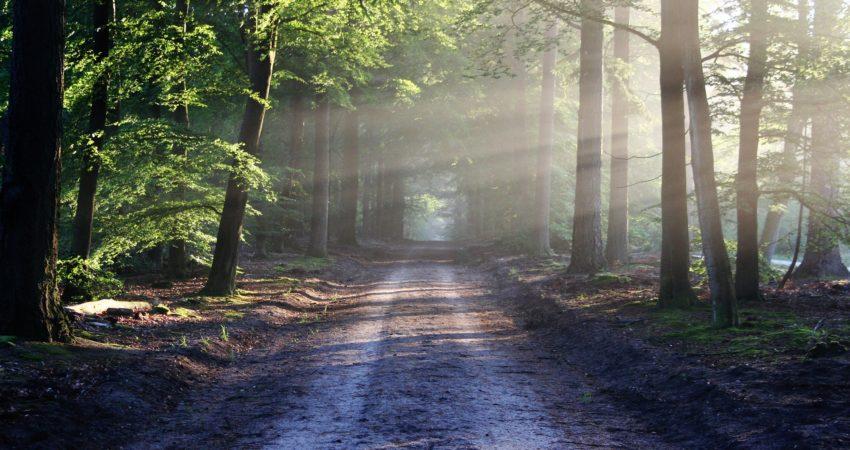 Wald schützen
