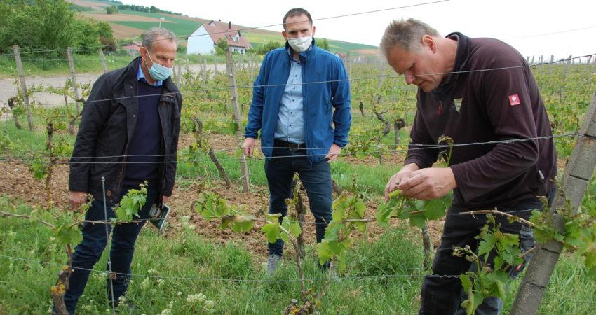 Die Schäden in den Wipfelder Lagen des Weinbauers Uwe Geßner sind immens. Ihn beobachten Wipfelds Bürgermeister Tobias Blesch und MdL Paul Knoblach.