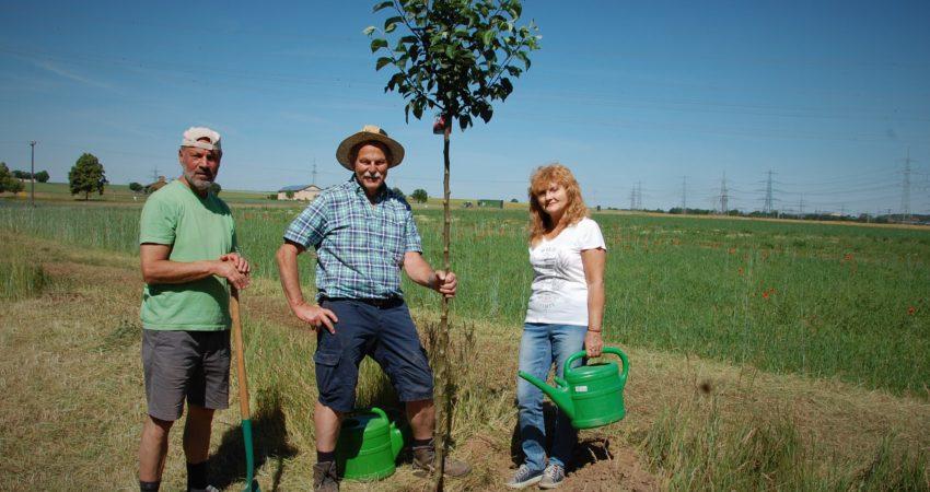 MdL Knoblach pflanzt einen Apfebaum zum Tag der Umwelt