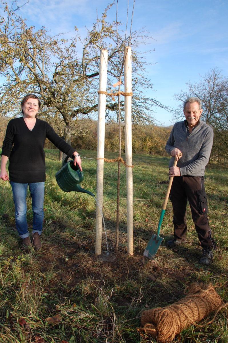 Kreisrätin und Fraktionsvorsitzende Birgit Schmitt (Ettleben) und MdL Paul Knoblach (Garstadt) pflanzen den versprochenen Korbiniansapfelbaum.