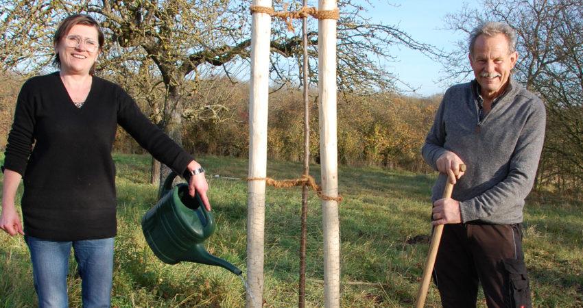 Kreisrätin und Fraktionsvorsitzende Birgit Schmitt (Ettleben) und MdL Paul Knoblach (Garstadt) pflanzen einen Korbiniansapfelbaum