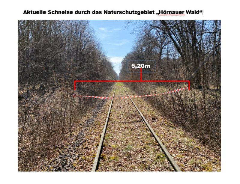 """Aktuelle Schneise mit 5,20 m Breite durch das Naturschutzgebiet """"Hörnauer Wald"""". Foto: BUND Naturschutz in Bayern (BN), Edo Günther"""
