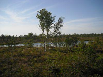 Das Schwarze Moor in der Rhön.